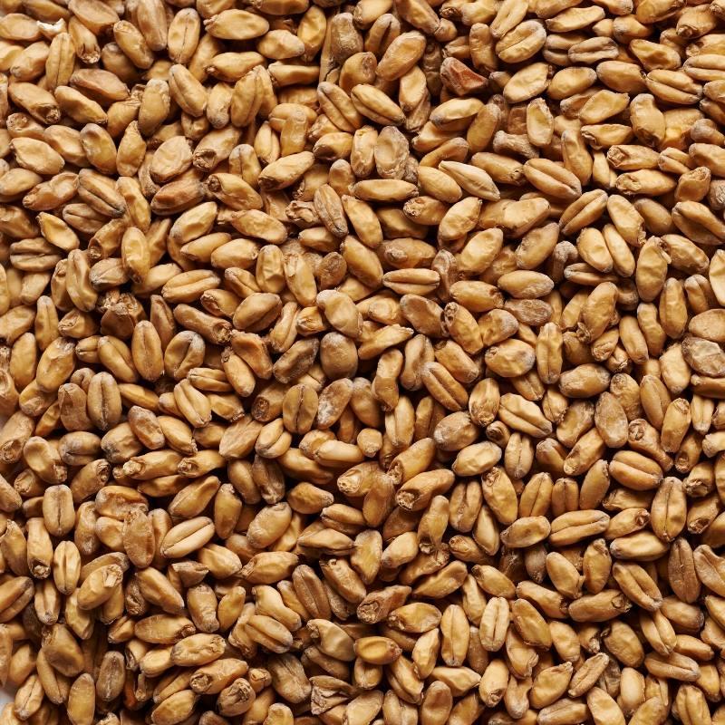 Joe White Wheat Malt